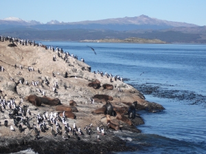 Sea lions and comorants